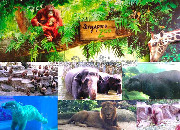 the-best-about-singapore-zoo