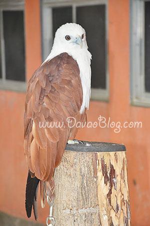 Eagles-Davao-Crocodile-Park-Davao-City-Tourist-Spots