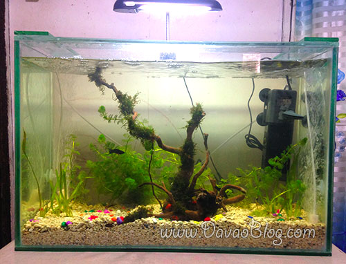 Water-Features-Aquarium-in-Feng-shui-2016-Fire-Monkey